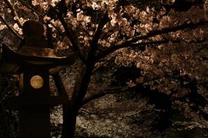 観音寺夜桜2