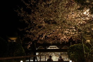 観音寺夜桜5