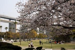 19瀬戸大橋記念公園桜1