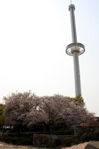 19瀬戸大橋記念公園桜6