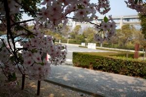 19瀬戸大橋記念公園桜8
