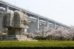 19瀬戸大橋記念公園桜9