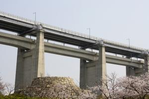 19瀬戸大橋記念公園桜10