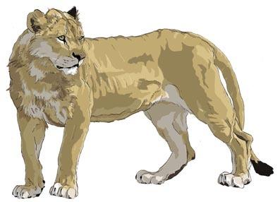 ライオンふりむき