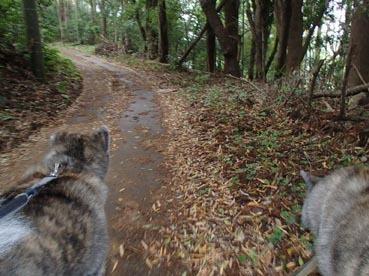 基地散歩4