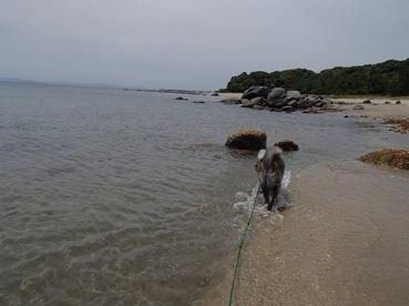 海水浴15