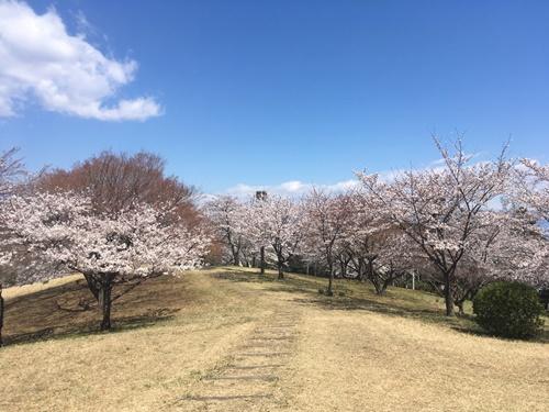 桜花見クウチャン4