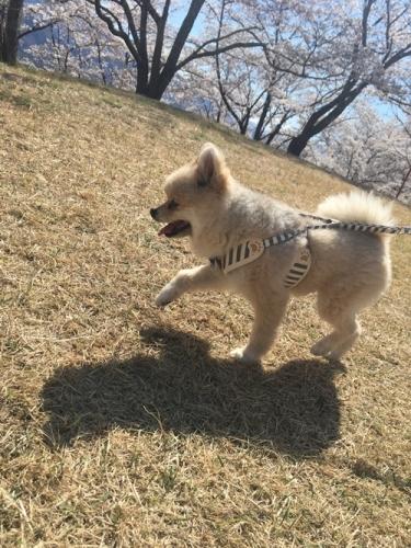 桜花見クウチャン5