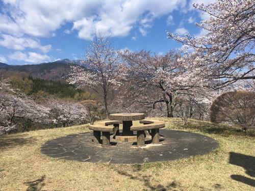 桜花見クウチャン6