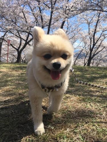 桜花見クウチャン9