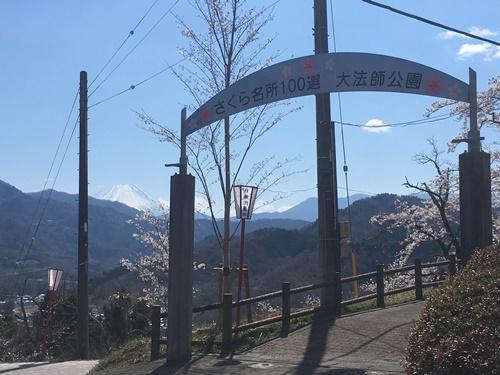 桜花見クウチャン12