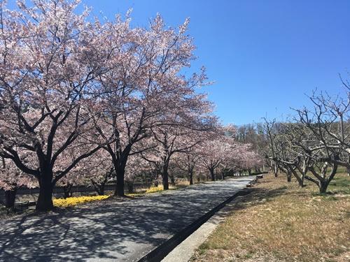 敷島公園13