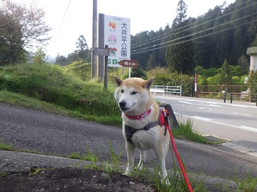 【愛知】大井平公園を散策