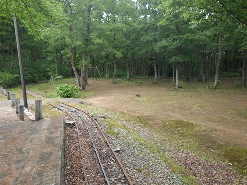 小国森林公園キャンプ場4