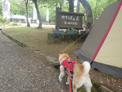 小国森林公園キャンプ場13