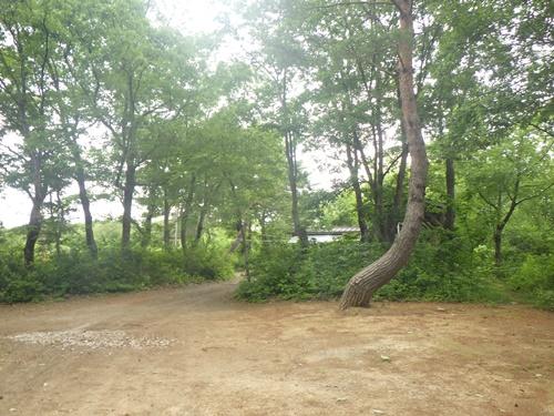 小国森林公園キャンプ場15
