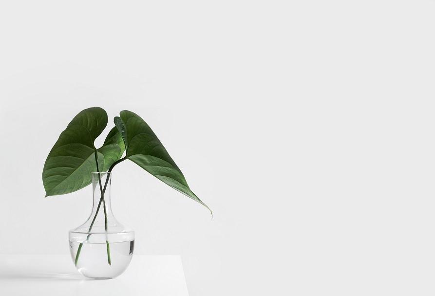 010508植物