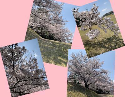 Collage_Fotor411asert_convert_20190411085532.jpg
