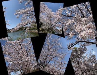 Collage_Fotor411duetuyw_convert_20190411085838.jpg