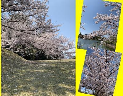 Collage_Fotor411kitweyu_convert_20190411085706.jpg