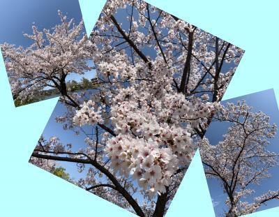 Collage_Fotor411siutew_convert_20190411085620.jpg