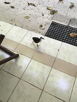 テラスの鳥③
