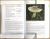The_Entplomataceaeof_Tasmania2.jpg