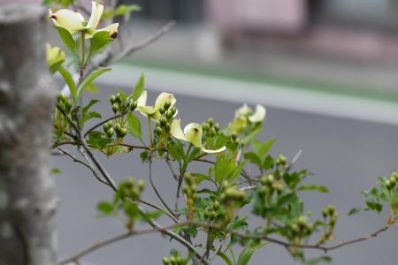 hanamizuki20190413-4.jpg