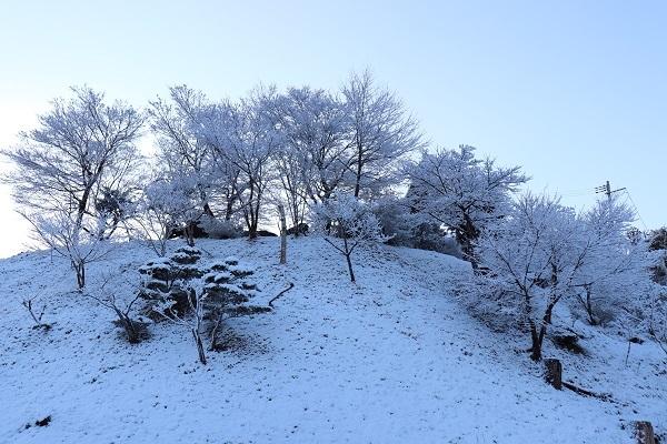 予想外の雪4
