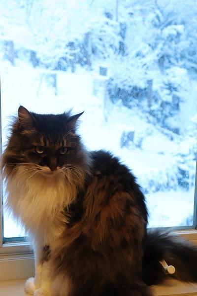 予想外の雪5