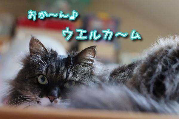上の住猫1