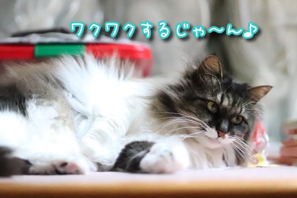 上の住猫3