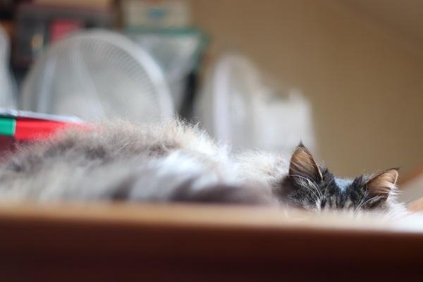 上の住猫5