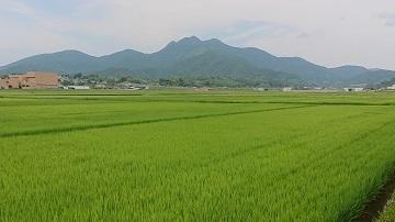 金峰町 田