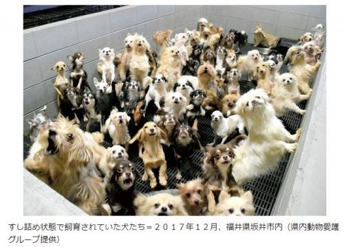 子犬工場不起訴不当