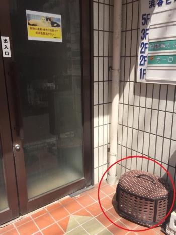 保護猫カフェに遺棄002