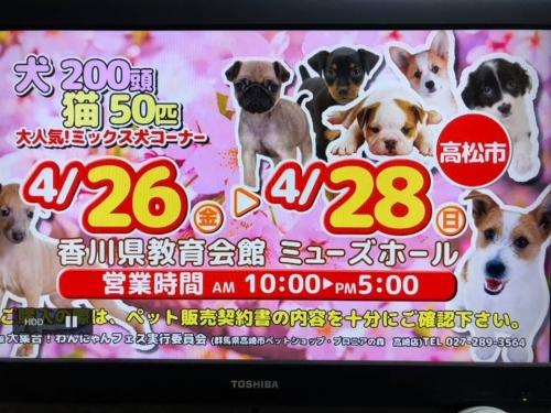わんにゃんフェス香川19-04-26