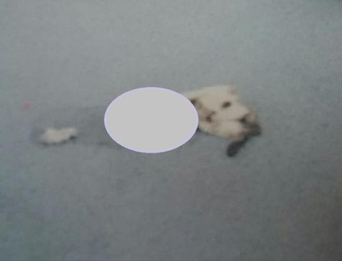 子猫虐待事件:三重県19-05-10