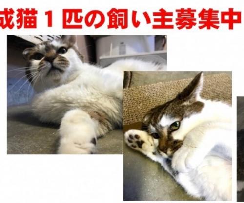 もろみちゃん001