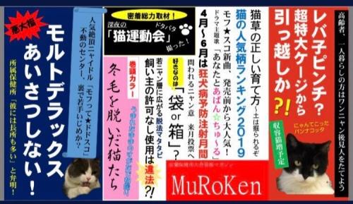もろみちゃん003