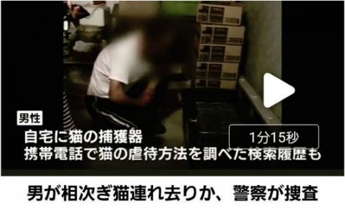 富山県猫虐待署名運動開始