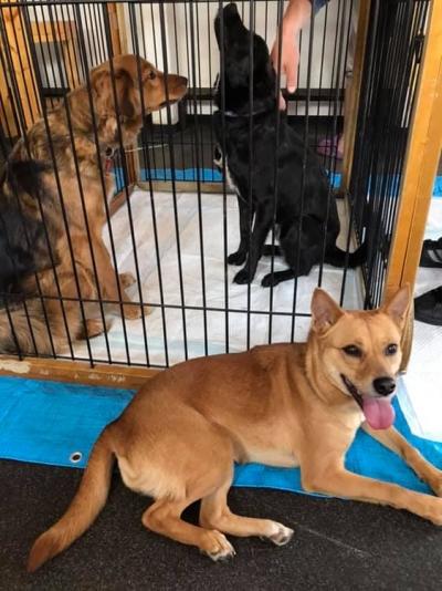 逢犬はうす「みらくる・フェスタ」19-05-19-001
