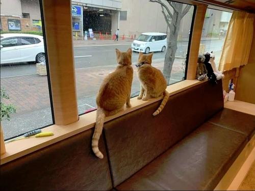 猫バス002