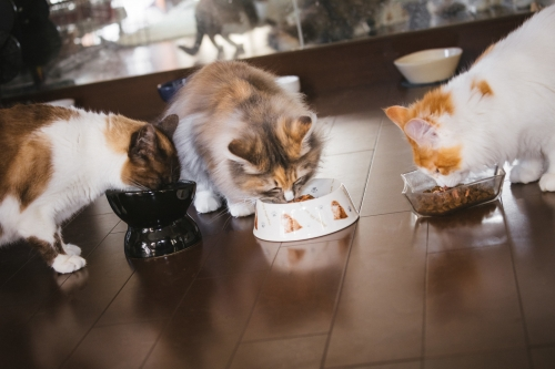 cat126IMGL6622_TP_V.jpg
