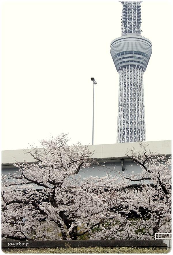 sayomaru26-312.jpg