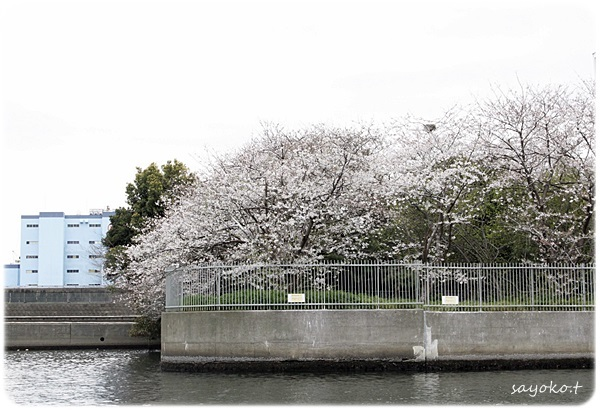 sayomaru26-327.jpg