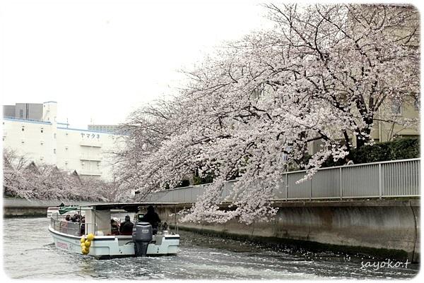 sayomaru26-330.jpg
