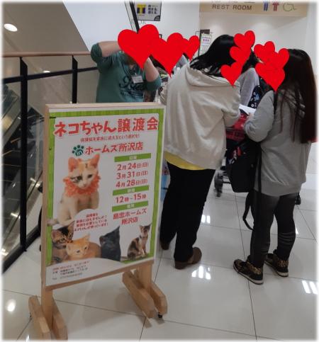 島忠譲渡会(2019年3月編)