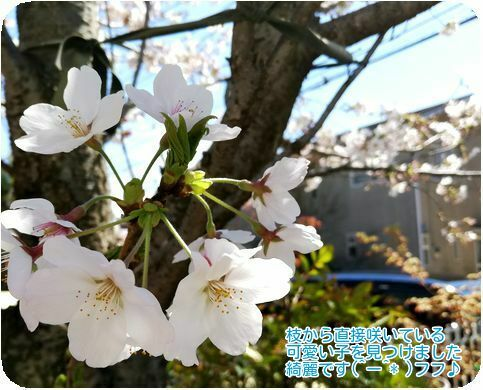 ⑤枝から花が