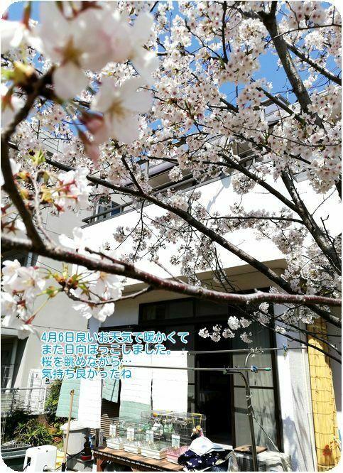 ①桜下で日向ぼっこ